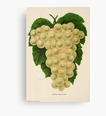 Canadian Horticulturalist 1888-96 - Green Mountain Grapes Canvas Print