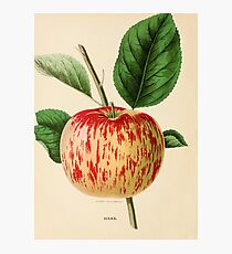 Canadian Horticulturalist 1888-96 - Haas Apple Photographic Print