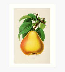 Canadian Horticulturalist 1888-96 - Howell Pear Art Print