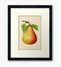 Canadian Horticulturalist 1888-96 - Pear Framed Print
