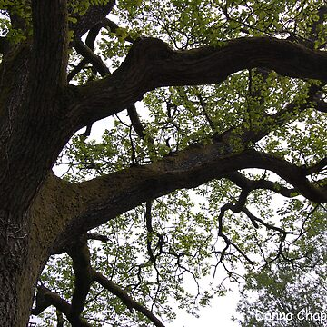 Branches by donnachapman
