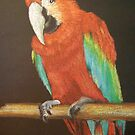 Red Macaw pastels by coolart