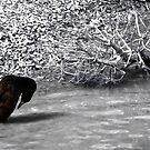Duck SC by solareclips~Julie  Alexander