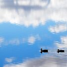 Autumn Lake Reflection by Sandra Chung