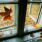 Autumn by Zoltan Madacsi
