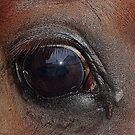 I am a beloved horse by loiteke