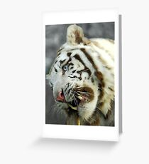 Drybrush tiger Greeting Card