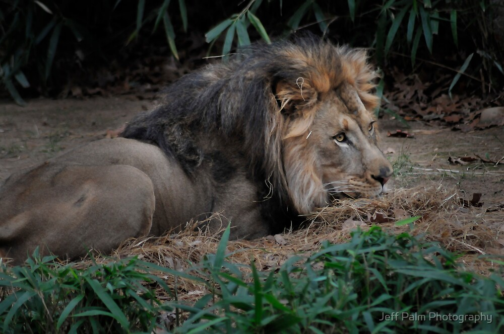 Restful by Jeff Palm Photography