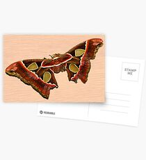 TROPICAL BUTTERFLY Postcards