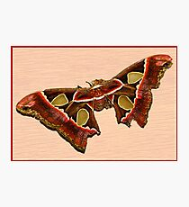 TROPICAL BUTTERFLY Photographic Print