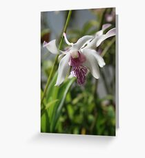 White Orchid with Purple Tips Greeting Card