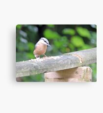 Visiting Nuthatch Canvas Print