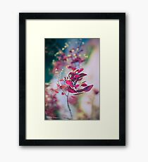 Japanese Breeze Framed Print