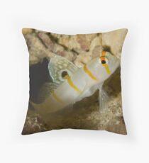 Sailfin Blemey Throw Pillow