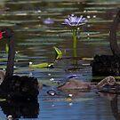 A Trip To The Big Pond by byronbackyard