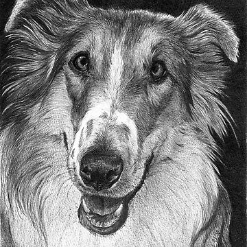 GRACIE/Rough Collie by FaithfulFaces