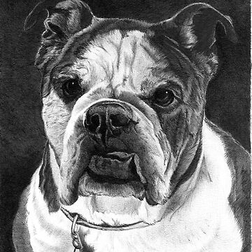 LUCKY/English Bulldog by FaithfulFaces