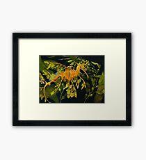 Leafy Seadraon and Kelp Framed Print