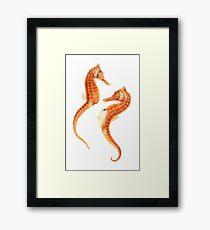 Seahorse Love Framed Print