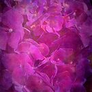 Hydrangea Textured in Pink Light by Joy Watson
