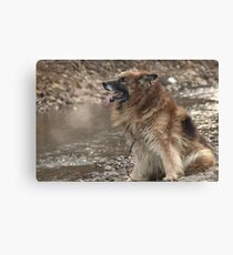 Long Haired German Shephard Male Canvas Print