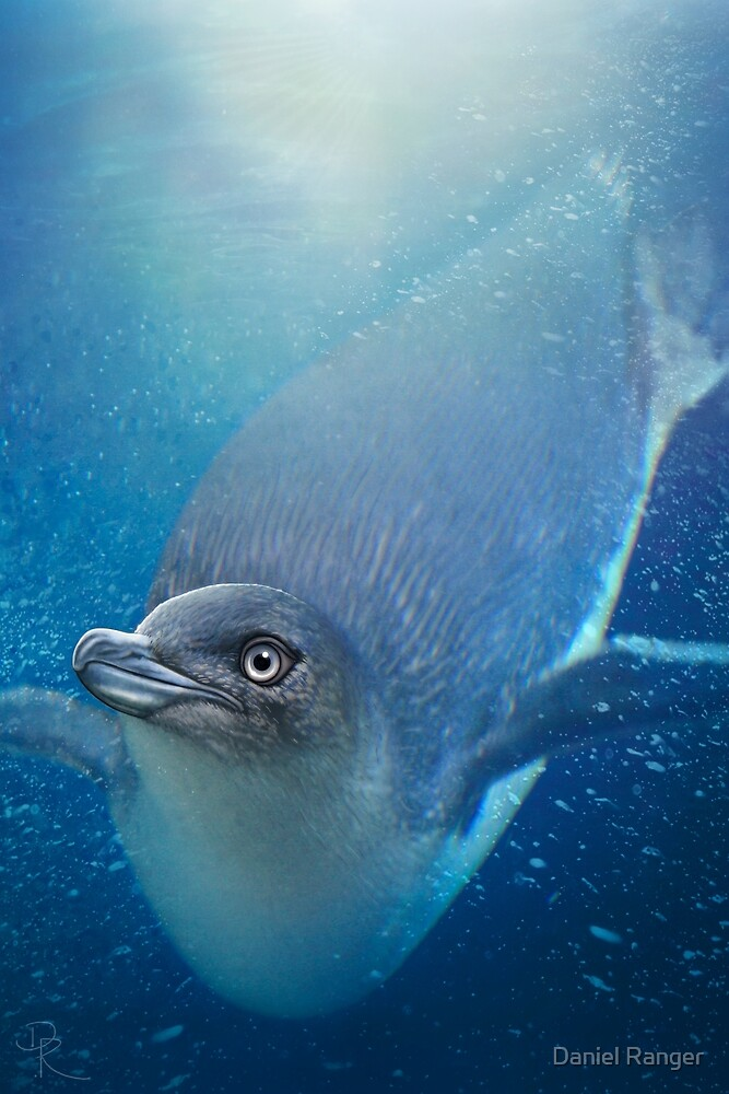 Penguin by Daniel Ranger