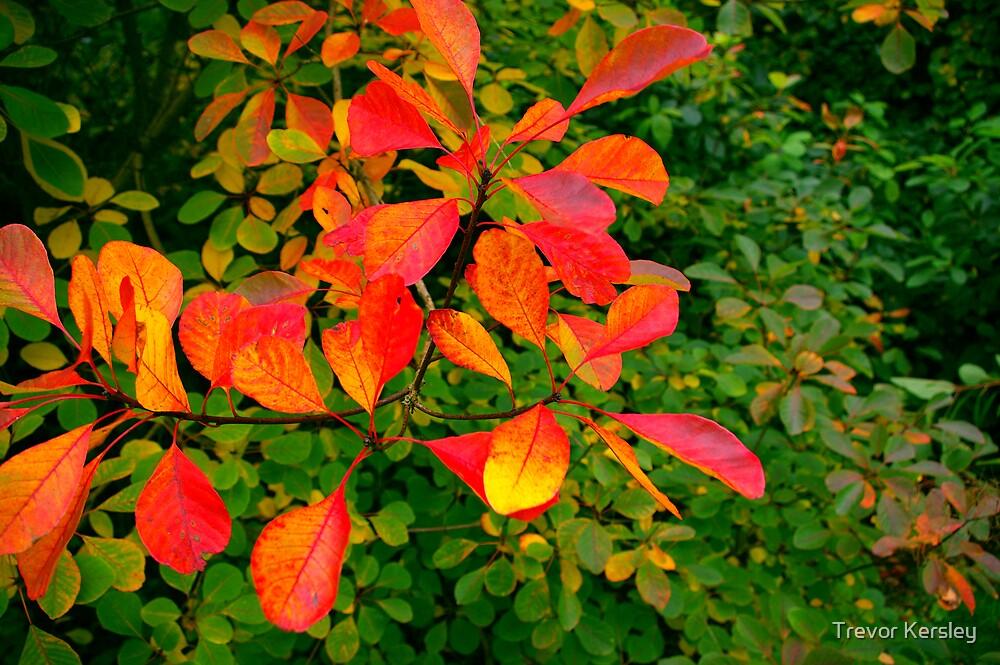 Red Leaves by Trevor Kersley