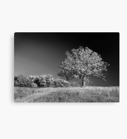 A grand old tree Canvas Print