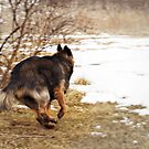 The Chase by Bine