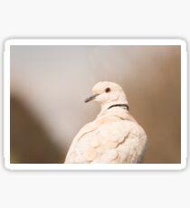 Barbary Dove Sticker