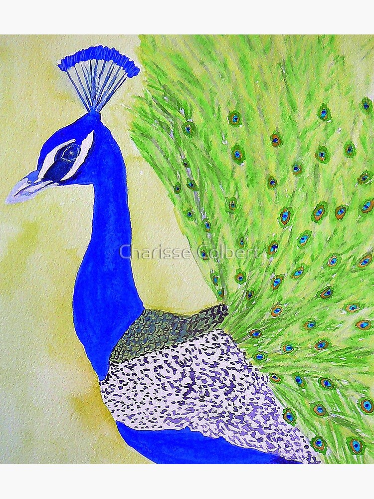 Peacock by charissecolbert