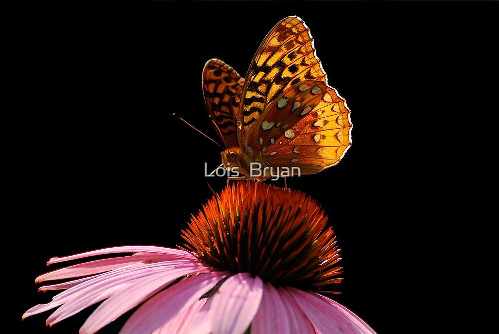 Fritillary Friend by Lois  Bryan