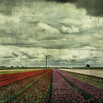 Dutch tulip fields by AndreaZaaijer