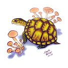 Box Turtle - Peach Mushrooms by AngelaDeRiso