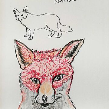 Red Fox by BillDrew