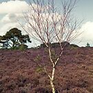 Tree on the Moorland by Maria Meester