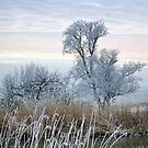 Frozen Trees by Maria Meester