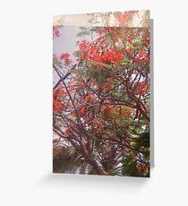 royal flame tree Greeting Card
