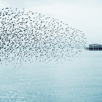 The Bird Show by chuckirina