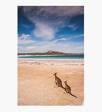 Kangaroos on a Beach Photographic Print