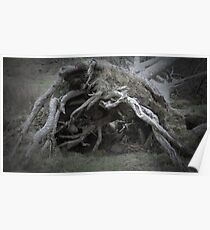 The enchanted fallen tree Poster