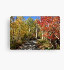 Autumn Trail Divide - Nova Scotia Canada Landscape Canvas Print