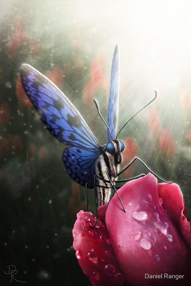 Butterfly by Daniel Ranger