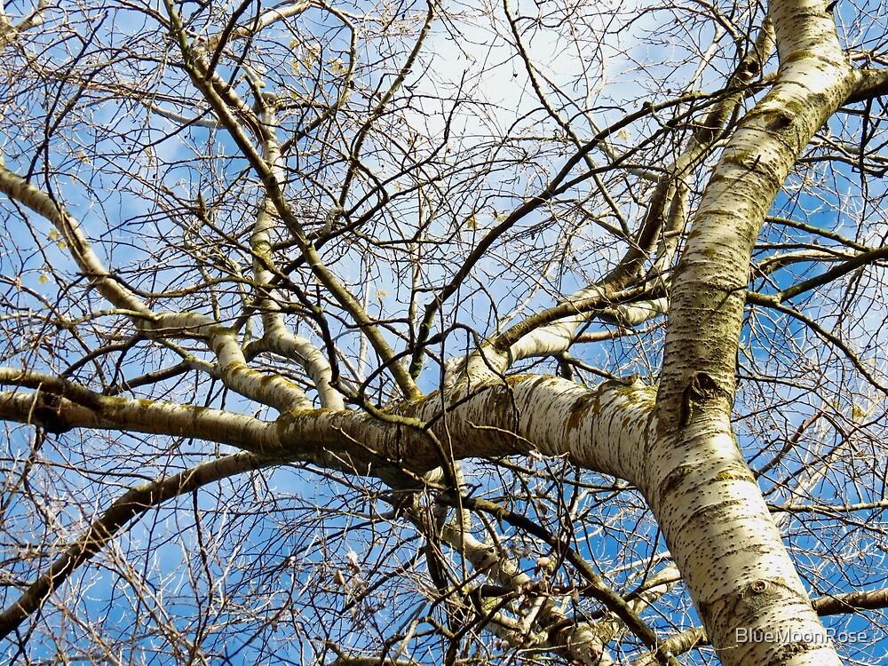 Auf der Schwelle zum Winter - Baum im November von BlueMoonRose