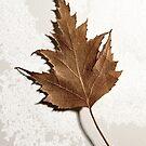 Leaf by Brian R. Ewing