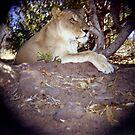 Lioness by Melissa Ramirez