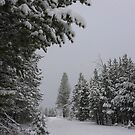 Snowfall in Washoe Meadows State Park by Jared Manninen