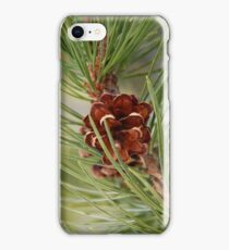 Branch and Cone of a Lodgepole Pine Tree iPhone Case/Skin