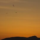 Vertical image of orange twilight sky punctuated with crows by Rod Raglin