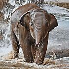 Baby Asian Elephant by AnnDixon